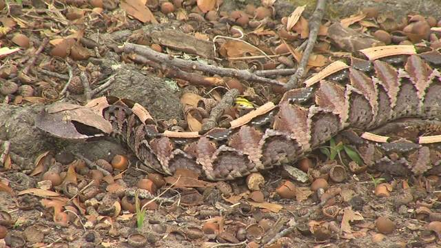 Highly Poisonous Snake Spotted In Milledgeville, Georgia