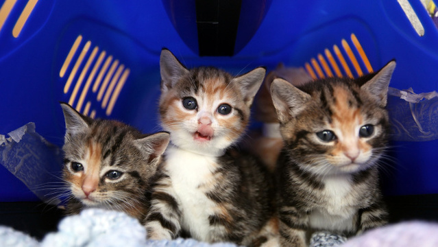 Want to cuddle cats for a living? Now's your chance!