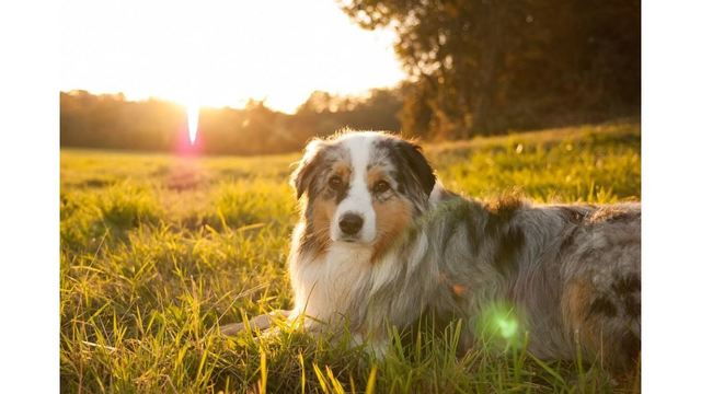 How to protect your animals from the heat and having a heat stroke