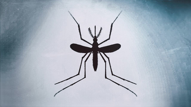 Death from West Nile virus reported in South Carolina