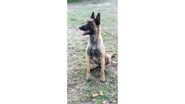GoFundMe page set up to help get Grovetown Public Safety a new K-9