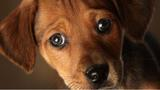 9 Brands of dry dog foods recalled