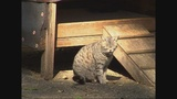 Waynesboro residents want a solution now to control stray animals