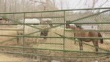 Rescue groups & neighbors say dozens of horses are life threatening conditions in Grovetown