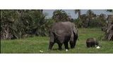 Elephants may be used for pet food